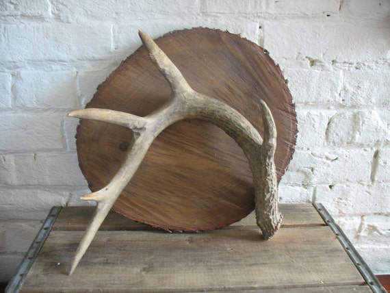 Vintage Deer Antler - Centerpiece- Wall Hanging - Craft Project - Nature - Rustic