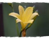 Mellow Yellow 4X6 Matte Print Photography