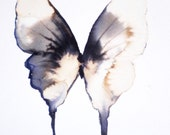 pale grey and golden winged butterfly with black markings