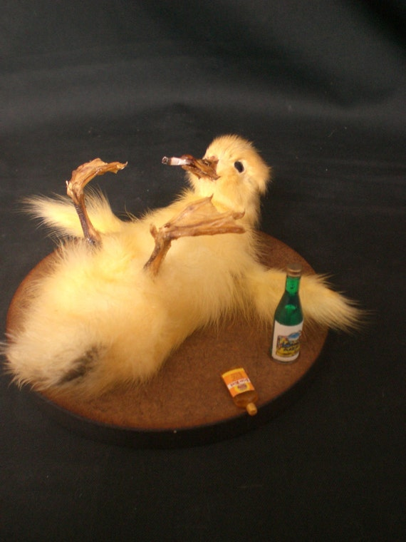 Taxidermy Duckling Drunken Ducky little party animal