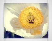 Yellow Flower Macro Photography Golden Crumbs 8x10 yellow white blossom with fallen pollen wall art decor