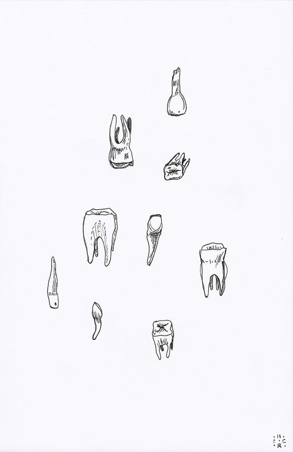 teeth drawing - black and white - tooth - line drawing - molars