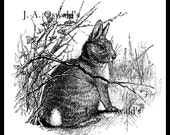 Cotton-tailed Bunny Digital Image Download Sheet for Iron on Tranfers, Pillows, Totes, and More