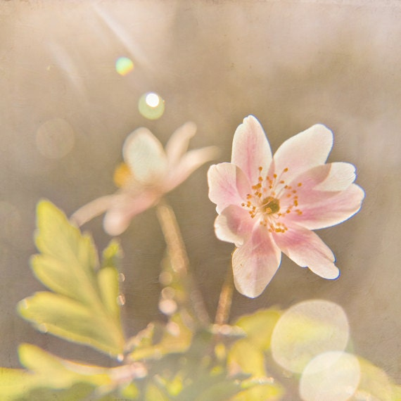 https://www.etsy.com/listing/96818765/dusty-pink-summer-flower-photograph