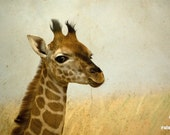 "Giraffe photograph, animal photography, nursery decor, wildlife picture, 12 x 8, beige, ""Lil Giraffe"""