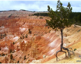 Lonely tree print, Bryce Canyon, Utah photography, Pine tree print, Travel USA, Orange landscape, Landscape print, Green and Rust