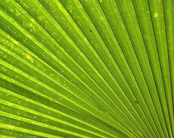Fresh green leaf, Nature photography, Spa Zen décor, Green stripes, Botanical art, Abstract nature, Lush Nature detail, Contemporary art