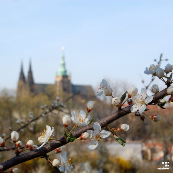 Prague photography, Prague castle, Petrin Hill, Cherry blossom art, Prague gardens,Romantic home décor,Dining room wall art,Spring Landscape