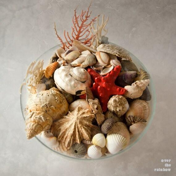 Seashells in a bowl, Coastal Wall art, Grey Beige, Beach photography,  Zen wall art, Bathroom décor, Engagement gift, Nautical wedding