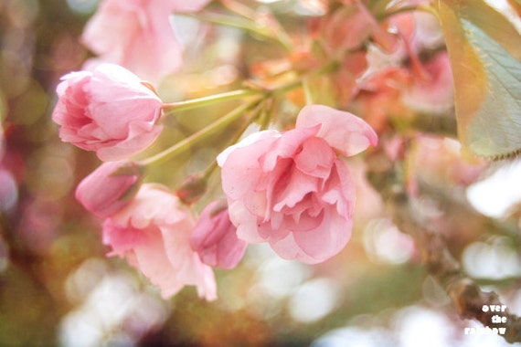 Pastel pink flower, Nature photography, Cherry blossom art, Soft pastels, Flower print, Spring home décor, Sakura tree, French country home