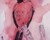 Grand Cardinal