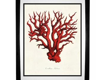 Red Coral 3 Nautical Vintage Style Art Print Beach House Decor