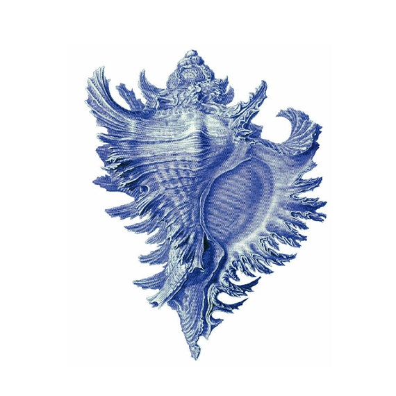 Blue Conch Shell Nautical Vintage Style Art Print Beach House Decor