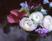 dreamy ranunculus bouquet - 5x7 fine art photo
