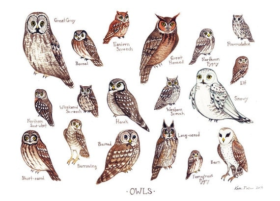 Owls of North America Birds of Prey Field Guide Art Print  / Watercolor Painting / Wall Art / Nature Print / Bird Poster