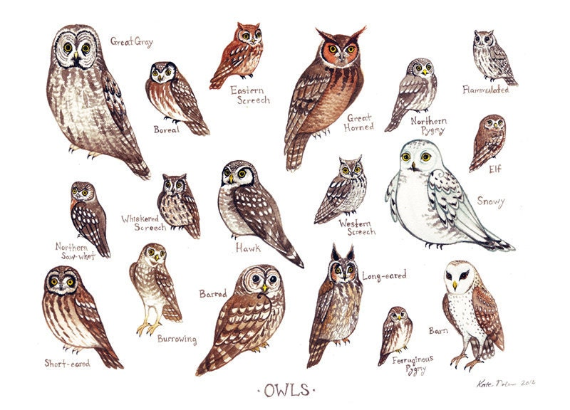 Owls of North America Birds of Prey Field Guide by ...