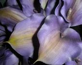 Purple Calla Lilies Bridal Flowers. 21 piece set. Plum Aubergine Real Touch Calla Lily Bride Wedding Bouquet Rhinestone accent