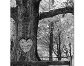 Photo personalized with your name carved into a tree  LOVE HEART TREE