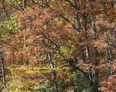 Fall Trees and Leaves in the Mountains on Skyline Dr -Virginia