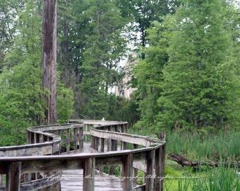 Phinizy Swamp Boardwalk - Augusta, Georgia