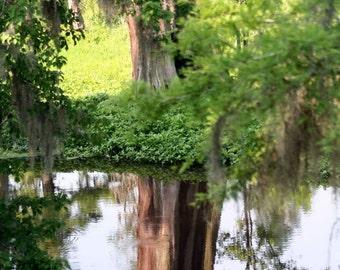 Reflecting Pool, Phinizy Swamp - Augusta, Georgia