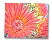 Orange Art, Red Art, Cactus Print, Cactus Flower, Desert Flower, Floral Art, Nature Photography, Cactus Blossom, 8x10, 11x14, 16x20