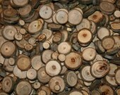 "100 Hickory Wood Slices 1/4"" x 2"" for crafts, price tags, large wood buttons branch twigs"