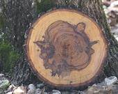 Wedding Tree Slab Slice centerpiece cake stand pedestal 12 inch Oak tree slices