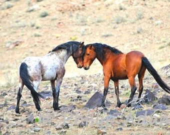 """Face To Face - Mustang Stallions - 5"""" x 7"""""""