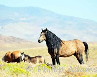 """Mesteño 4 - Mustang Stallion - 8.5"""" x 11"""""""