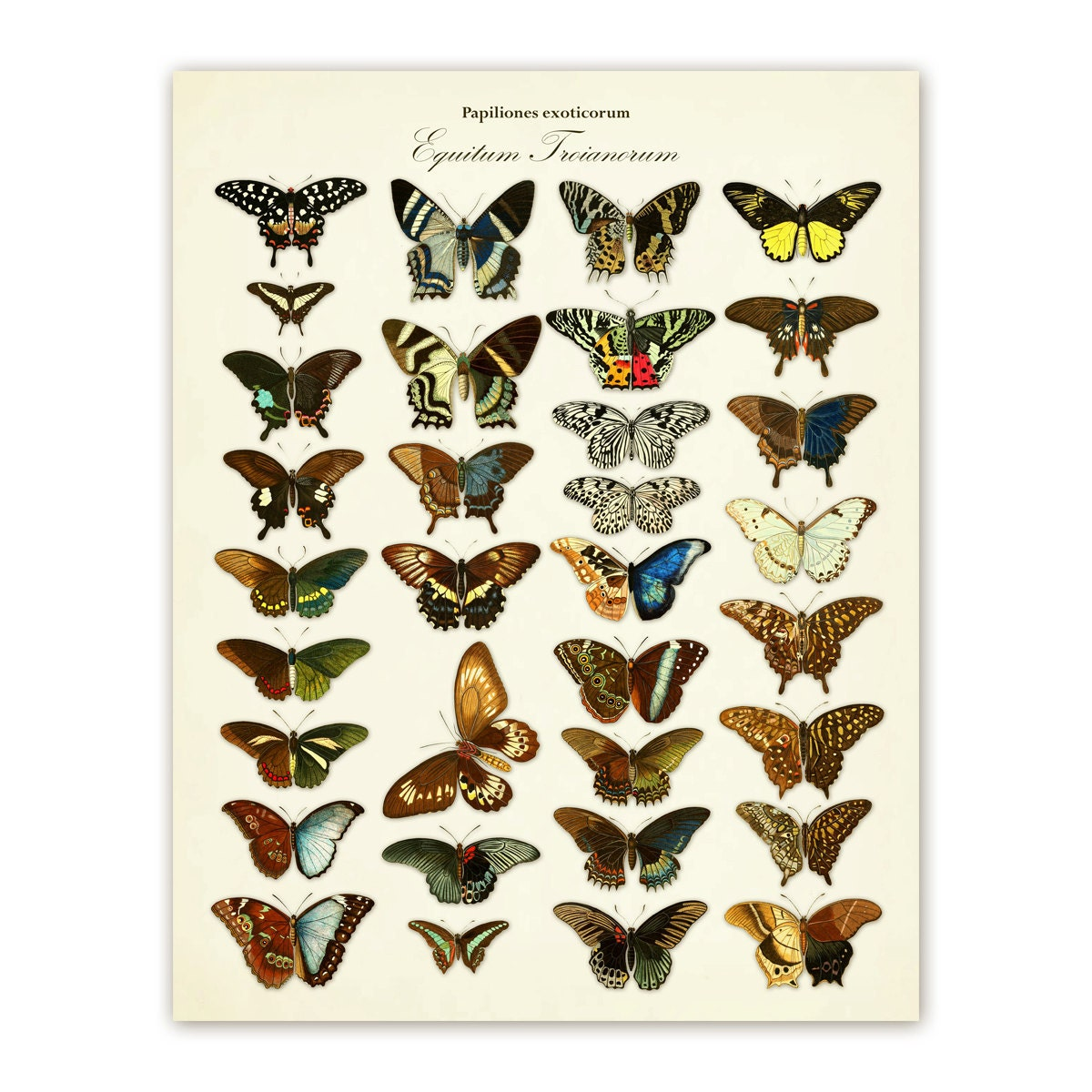 Butterfly Poster Digital Download 11x14 Victorian Antique