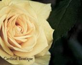 Fine Art Photograph Home Decor Morning Rosa 11x14