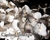 Fine Art Photograph Hydrangea Blossoms Part 1 - 11x14 Flowering