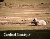 Fine Art Photograph Decor Sheep Farm 11x14 Picture