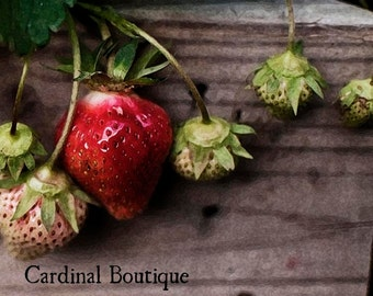Fine Art Photograph Home Decor Simply Spring Strawberries 8x10