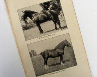 Vintage 1920 Horse Collage Kit Ephemera