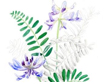 Wildflower (Pyne's Ground Plum) Print