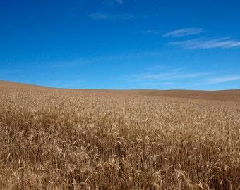 Washington State print, Palouse print, Washington canvas, wheat field print, Washington print, rural Washington