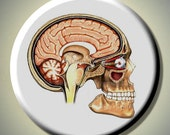 "HUMAN ANATOMY Anatomical SKULL Head Medical 2.25"" large Round Fridge Magnet"