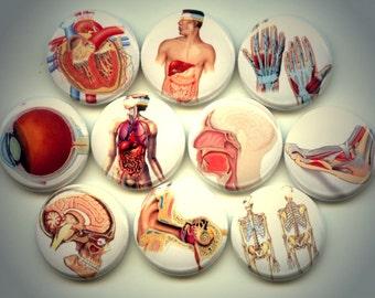 "HUMAN ANATOMY Medical 10 Pinback 1"" Buttons Badges Pins"