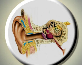 "HUMAN ANATOMY Anatomical EAR Medical 2.25"" large Round Fridge Magnet"