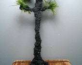 Sequoia Inspired Aqua Bonsai