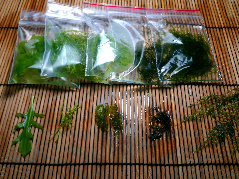 Aquatic plant etsy for Koi larousse