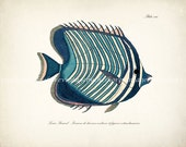 Fish Print - Vintage Fanciful Fish Coastal Decor Nautical Giclee Print - Plate viii Teal Stripe