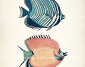 "Vintage Fish ""Two Fanciful Fish"" Natural History Wall Decor Art Print - Plate xxvi 8x10"