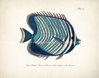 Fish Print - Vintage Fanciful Fish Coastal Decor Nautical Giclee Print - Plate viii Teal Stripe