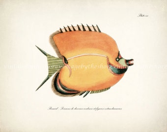 Fish of the Coral Reefs Illustration - Natural History Wall Decor Print 10 x 8 Coral