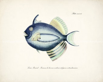 Vintage Fanciful Fish Natural History Giclee Art Print - Plate xxxvii Sea Blue