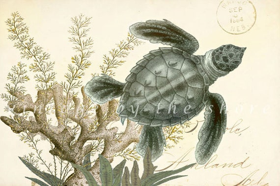 "Nautical Collage ""Sea Turtle"" Natural History Art Print 6x4"