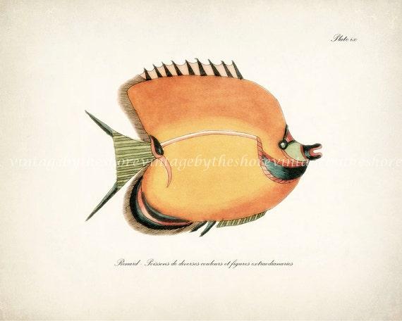 Fish of the Coral Reefs Illustration - Natural History Wall Decor Print 10 x 8 Coral